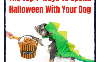 Top 7 Ways to Spend Halloween with Your Dog